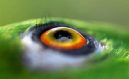 EyeParrot_w.jpg